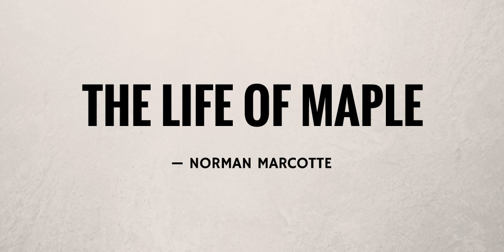 The Life Of Maple by Norman Marcotte